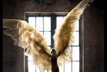 Wings  / by Marianne Eberle