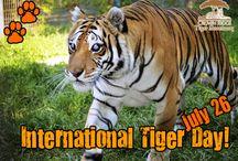 Crown Ridge Events / by Crown Ridge Tiger Sanctuary