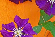 Color combinations / by Pam Critchfield