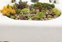 future garden / by JMull