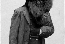 Buffalo / by Eve Hogue