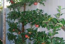 Gardening / by Margaret Peele
