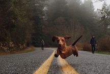 wieners . . . hehe / by Chad Wick