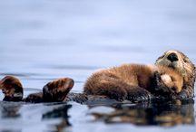 Animals / by Heather Walrath