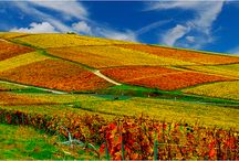 Day Trip from Paris - Epernay / by Paris Vacation Rentals - CobbleStay.com