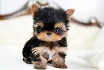 too cute animals!! / by Teresa N