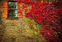 Autumn Beauty / by Linda Ferreira