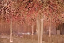 trees / by Brenda Marquez