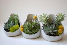 Succulents / by Luke Neumayr