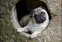~PUGS~ / by BARB