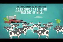 Dairy Data / by New Mexico Farm & Livestock Bureau