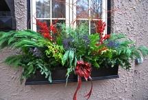 Window boxes / Seasonal / by anne ryan