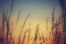 sun / by Julia Stackpole