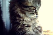 gatos / by Yamilet Gutierrez