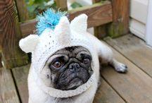 Crochet  / ropa para mascotas / by Luz Maria Caceres