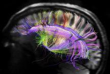 Brainy / Biology gives you a brain. Life turns it into a mind. / by Christina Lipinski
