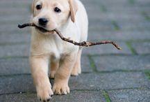 Pets / by andrea baez