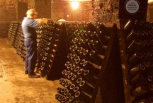 Wine Production  / This board is dedicated to showcasing the complete process of producing our wines.  / by Freixenet