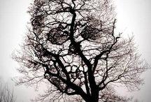 Skull and bones / by Jennifer Hillgrove