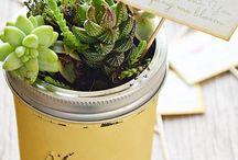 mini gardens / by Sunnyside Nursery