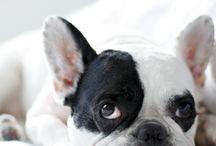 puppy dogs / by Mari Velasquez
