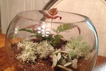 Terrariums and Dish Gardens / by Beverly Kennedy