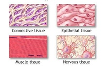 Cells / All things cell & tissue related...it's like a world of it's own inside the human body! Amazing. / by Andrea Delaluz