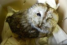 Oh, Hello…Owls / by Joyce Jian