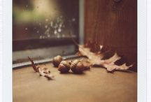 Autumn Inspiration / by Sugar & Spice