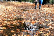 Fall Outdoor Activities for Kids / by Ranger Rick