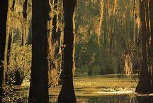Louisiana / by Karen Lensing