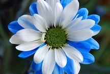 flowers / by Brooke Miller
