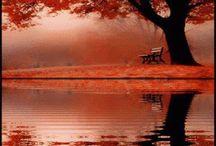 fall / by Sherry Bordwell