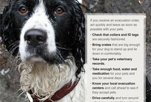 Survival Tips for your animals / by The Survival Mom