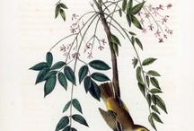 Animal and Botanical Prints / Lots of lovelies! / by Tara Tarbet