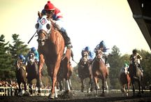 Horse Racing / by Time To Ride