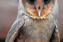 Owls / My favorite bird of prey. / by James Hodur