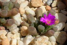 Plants I have Plants I want / by Sandra Hurt