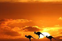 Kangaroos...pocket full of miracles / by Roberta Rainwater