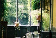 dream home: greenery / by Siri Paulson