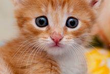 meowth / MEOW MEOW MEOW MEOW MEOW MEOW MEOW MEOW MEOW MEOW MEOW MEOW MEOW MEOW MEOW MEOW MEOW MEOW MEOW MEOW MEOW MEOW MEOW MEOW MEOW MEOW MEOW MEOW MEOW MEOW MEOW MEOW  / by not a suspicious kitten