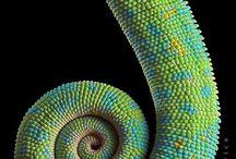 Spiral Madness / by madebymanos.com