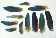 Feathers / by Lilith Eeckels