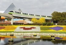 Disney World / by Chip and Company