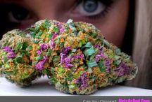 Marijuana | Ganja | Cannabis / Marijuana | Ganja | Cannabis | Weed | Bud | Dank | Kush / by Ganja Girls