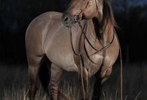 Horses / by Patricia Grissom