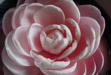 Lovely Petals / by Monica Isabel