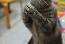 Soft kitty, Warm kitty / by Stephanie Neville
