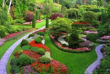 Gardening-yard / by Cindy Evans