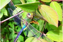 Dragonflies / by Pam A.